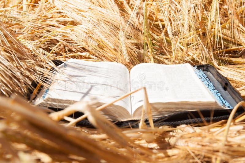 Biblia en campo de las espiguillas fotografía de archivo