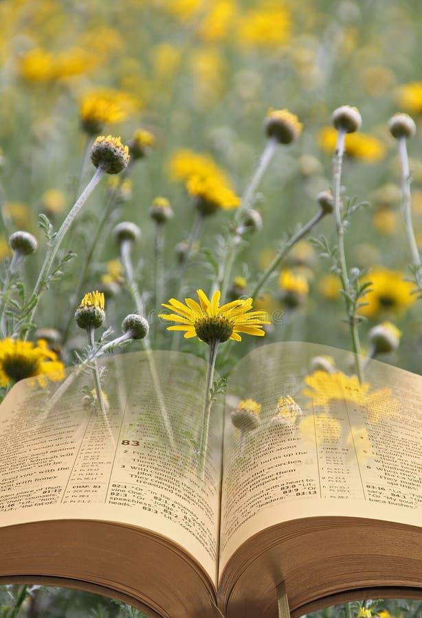 Biblia en las flores imagenes de archivo