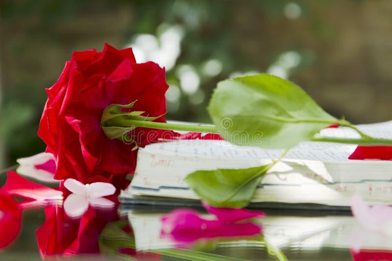 Biblia que brilla intensamente abierta en naturaleza foto de archivo