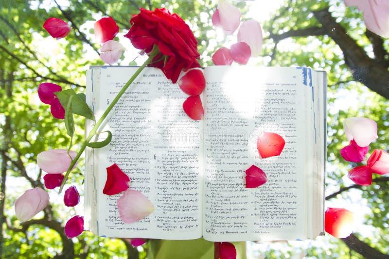 Biblia que brilla intensamente abierta en naturaleza fotos de archivo libres de regalías