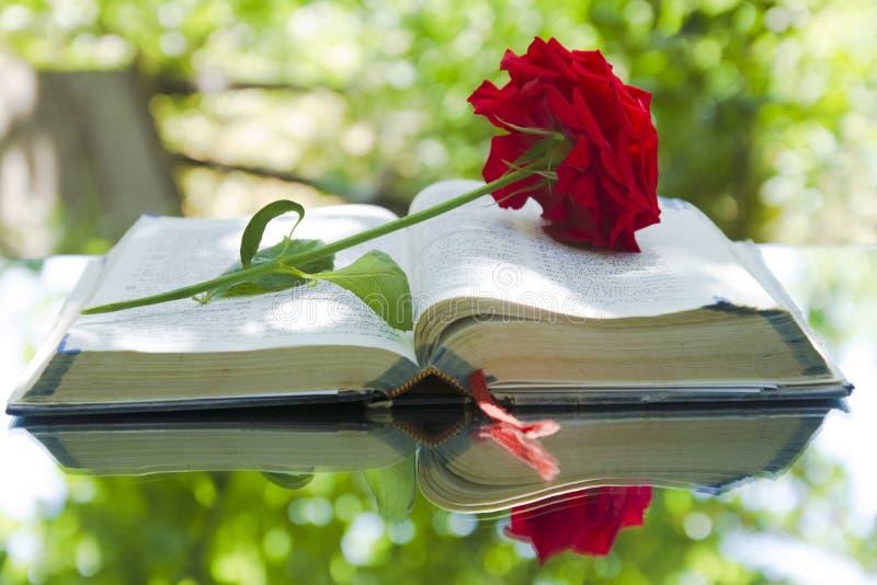 Biblia que brilla intensamente abierta en naturaleza foto de archivo libre de regalías