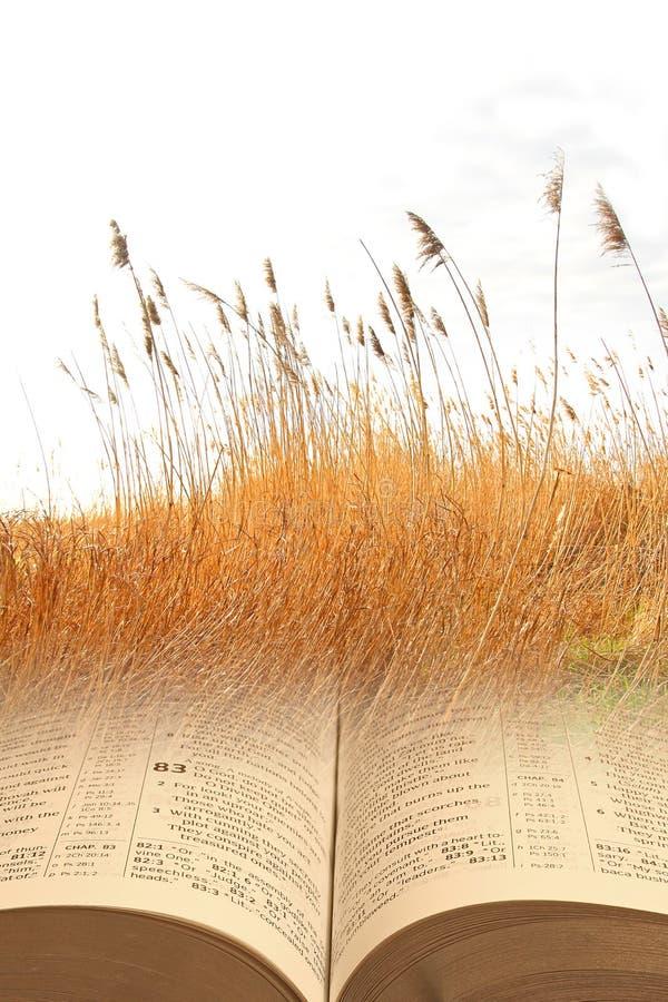 Biblii parabole obrazy royalty free