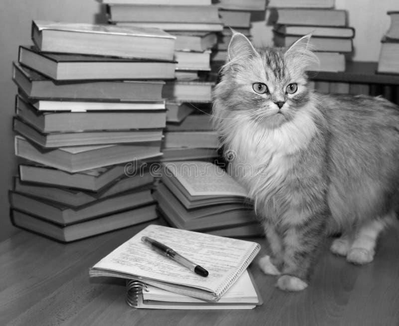 Bibliophile fotografia de stock