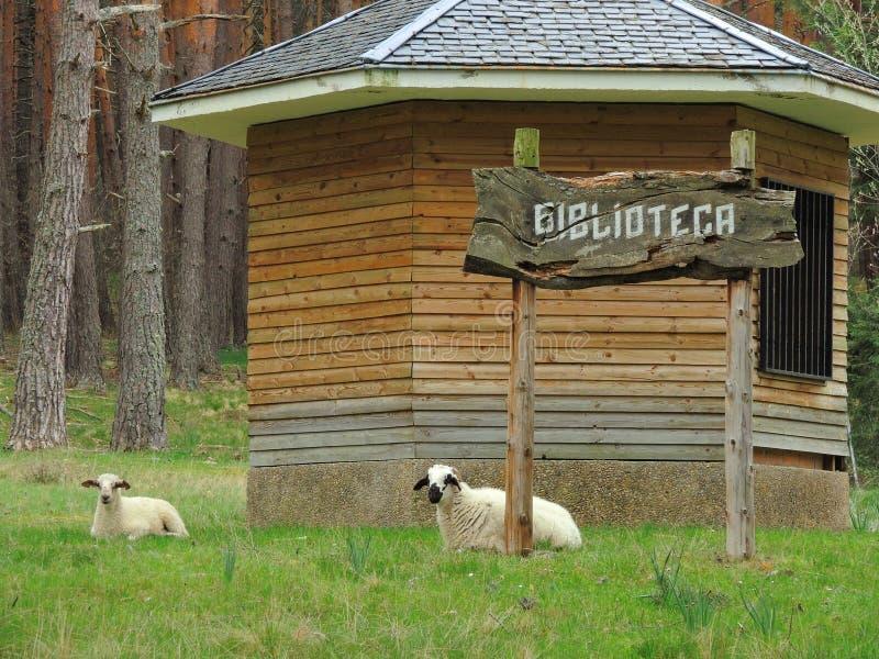 biblioteca Βιβλιοθήκη και πρόβατα στη χλόη στοκ εικόνα με δικαίωμα ελεύθερης χρήσης