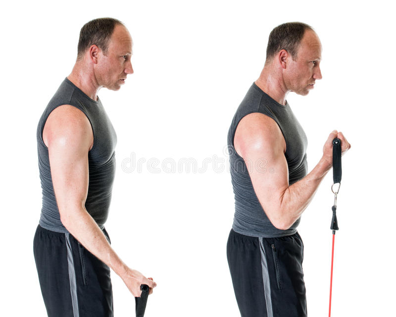 Bicep Curl. Exercise with resistance band. Studio shot over white royalty free stock images