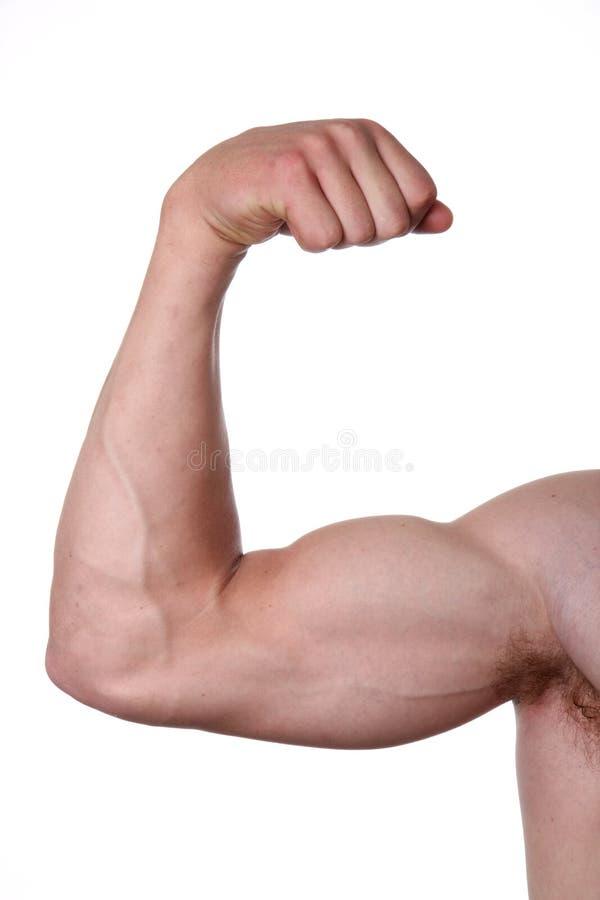 Bicep Muscles (isolato) immagine stock libera da diritti