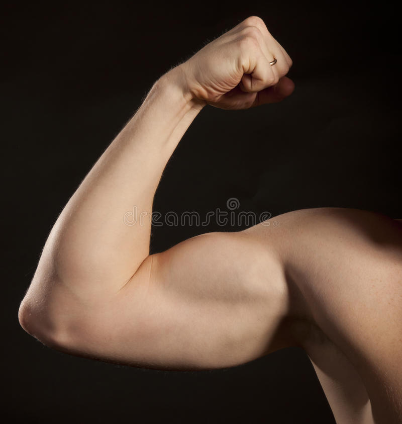 Biceps royalty free stock photography