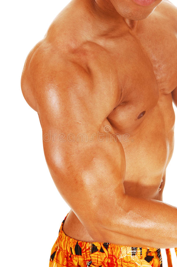 Biceps and chest. A closeup picture of a muscular young bodybuilder showing his biceps and chest for white background royalty free stock image