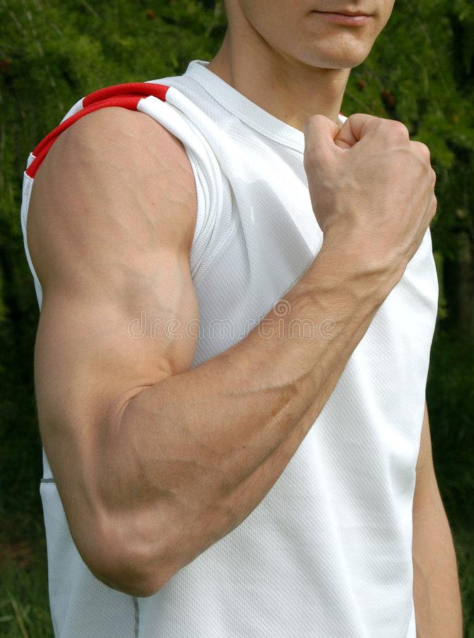 Download Biceps flexed στοκ εικόνες. εικόνα από λυγισμένος, υγεία - 386128