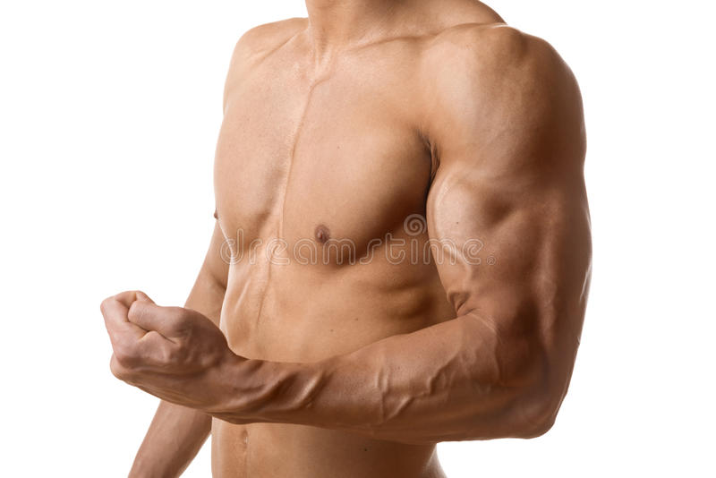 Biceps muscle of young man royalty free stock photo
