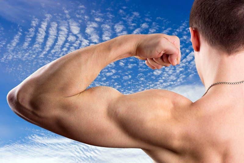 Download Bicepsy obraz stock. Obraz złożonej z jeden, dorosły - 28958627