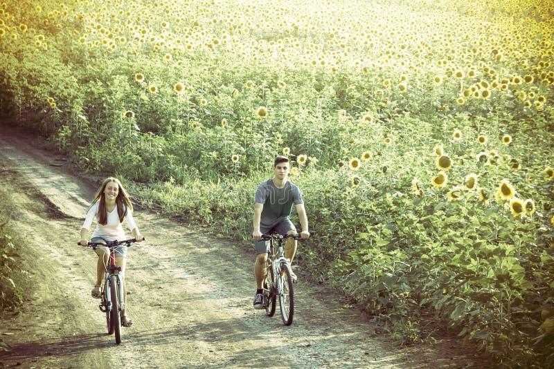 Bici adolescente del montar a caballo de los pares en campo del girasol foto de archivo libre de regalías