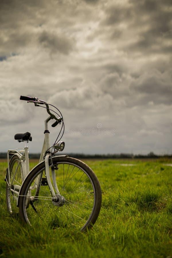 Bici che sta nei prati - ritratto fotografia stock