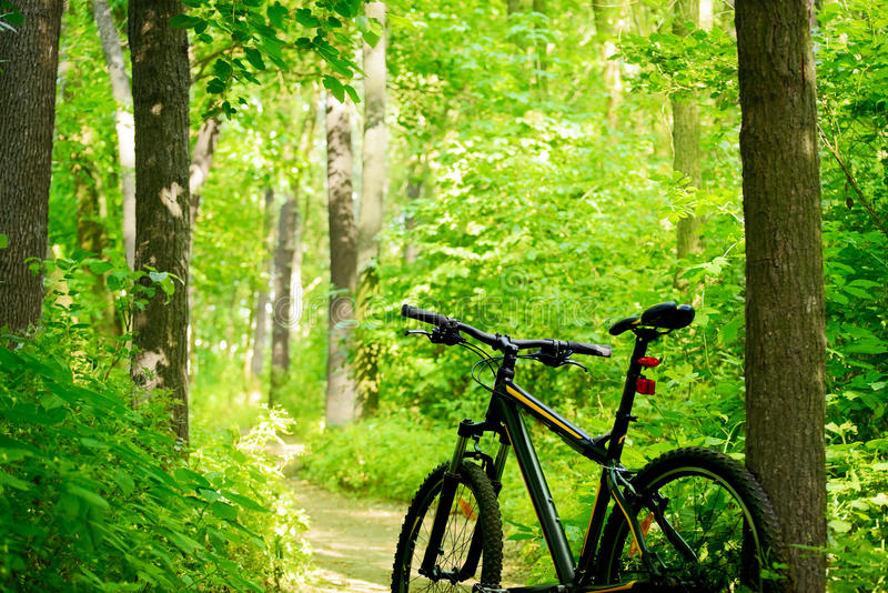 Bici de montaña en el rastro en el bosque fotos de archivo