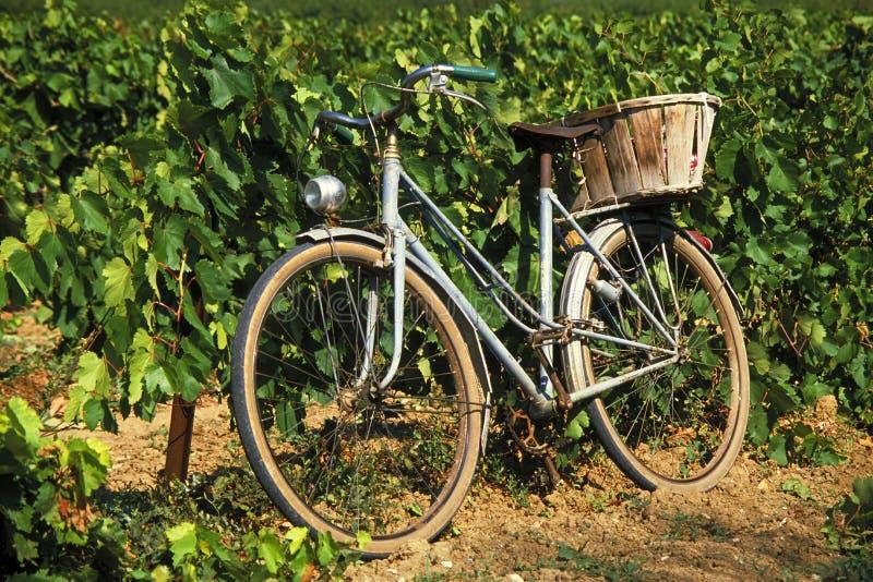 Bici francesa vieja en viñedo imagen de archivo libre de regalías