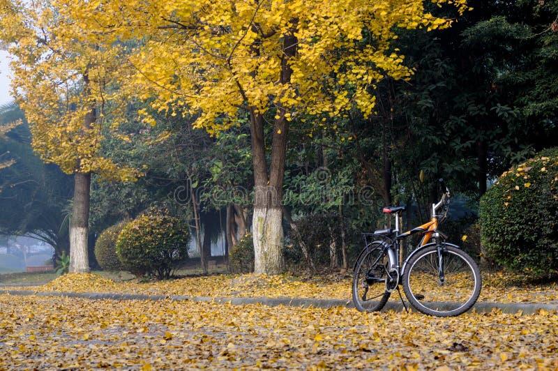 Bici y gingkoes fotos de archivo libres de regalías