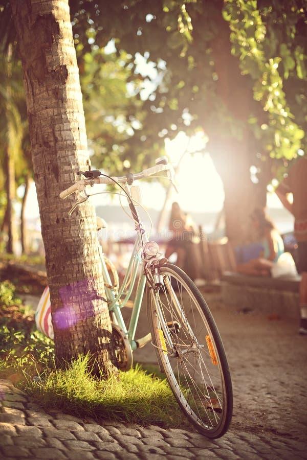 Bicicleta cerca de la palmera imagen de archivo libre de regalías