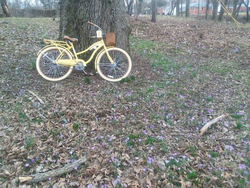 Bicicleta com natureza foto de stock