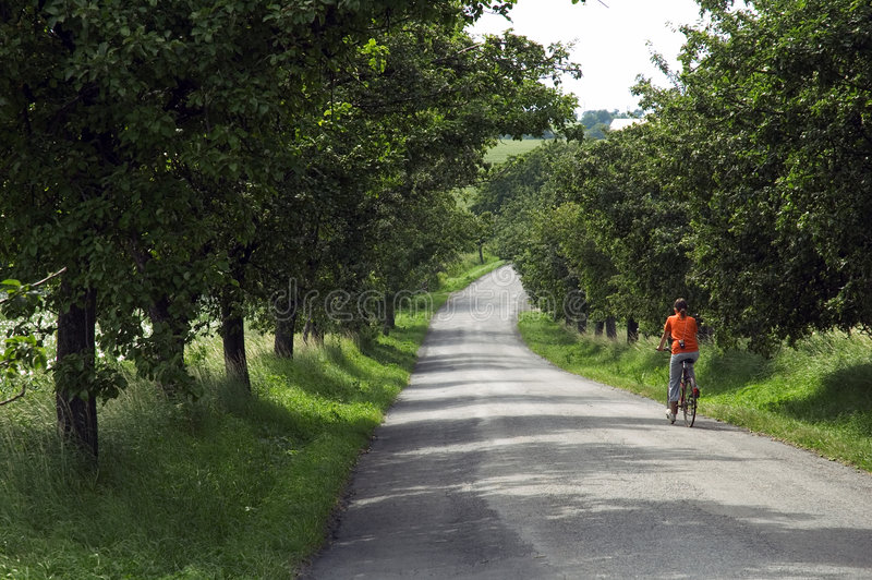 Bicicleta da equitação da menina na estrada através das árvores foto de stock