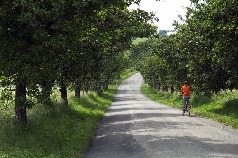 Bicicleta del montar a caballo de la muchacha en el camino a través de árboles foto de archivo