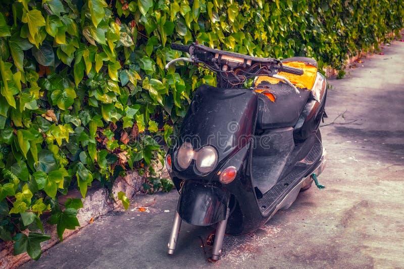Bicicleta motorizada abandonada contra um fundo da hera imagens de stock royalty free
