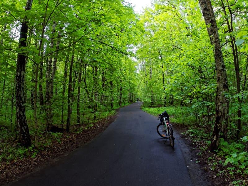 Bicicleta na estrada através da floresta verde fotografia de stock royalty free