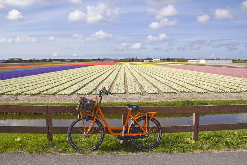 Bicicleta nos campos de flor imagem de stock