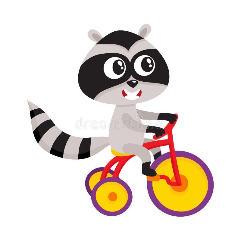 Bicicleta pequena bonito da equitação do caráter do guaxinim, triciclo, ciclismo, ilustração dos desenhos animados ilustração royalty free