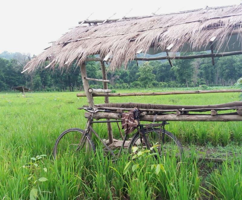 Bicicleta velha no campo de almofada fotografia de stock