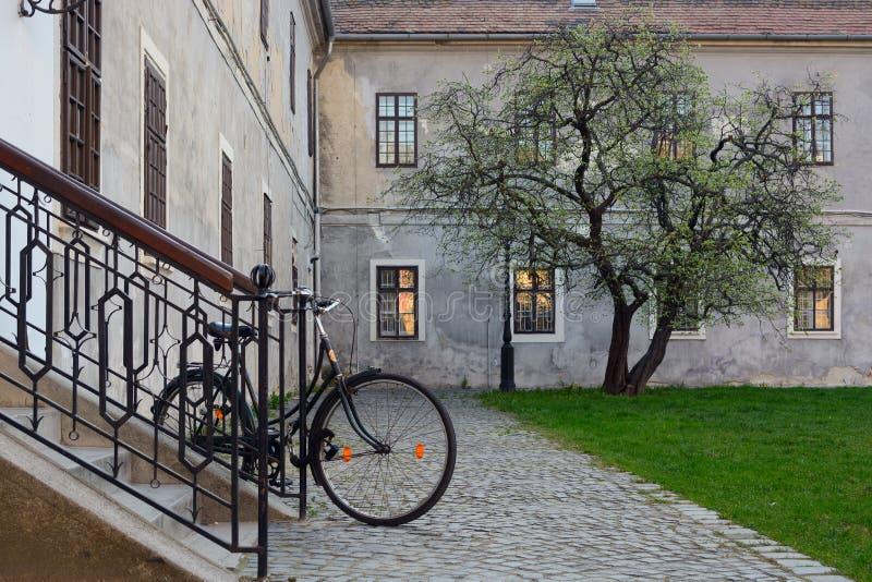 Bicicleta y árbol en el área urbanizada totalmente de piedra imágenes de archivo libres de regalías