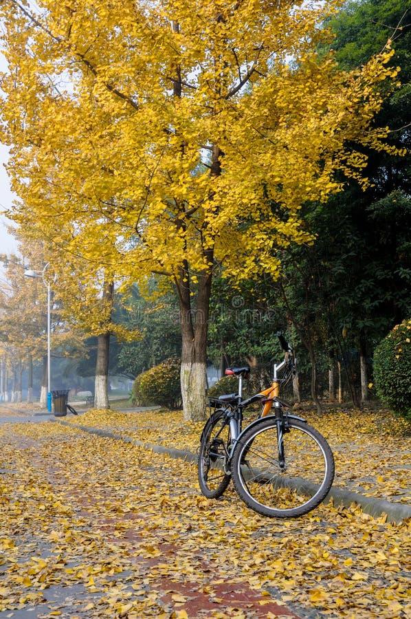 Bicicleta y gingkoes imagen de archivo libre de regalías