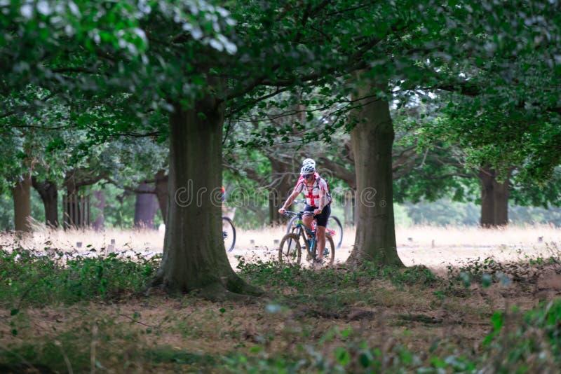 Bicicletas da equitação em Richmond Park foto de stock royalty free