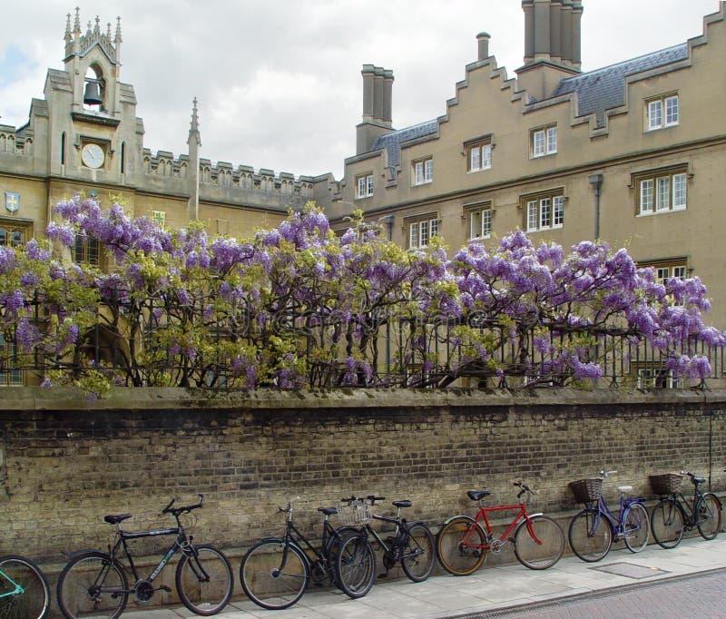 Bicicletas de Cambridge fotografia de stock