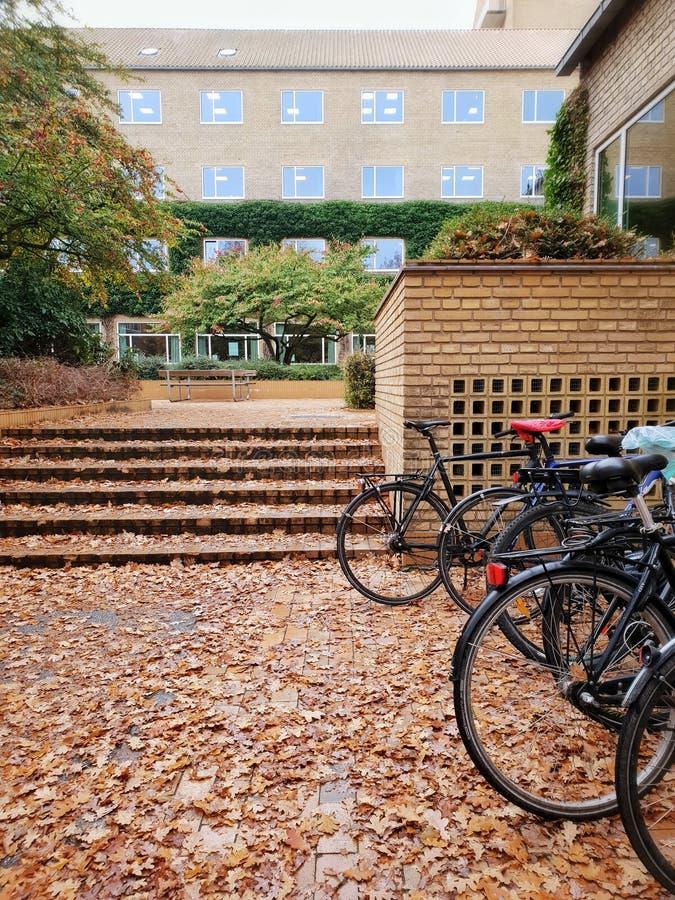 Bicicletas estacionadas na universidade de Aarhus imagens de stock royalty free