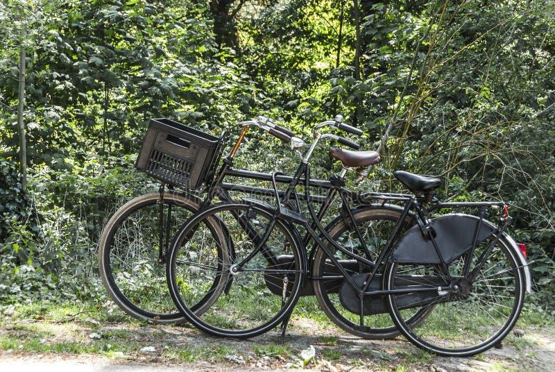 Bicicletas estacionadas perto de uma floresta imagens de stock royalty free