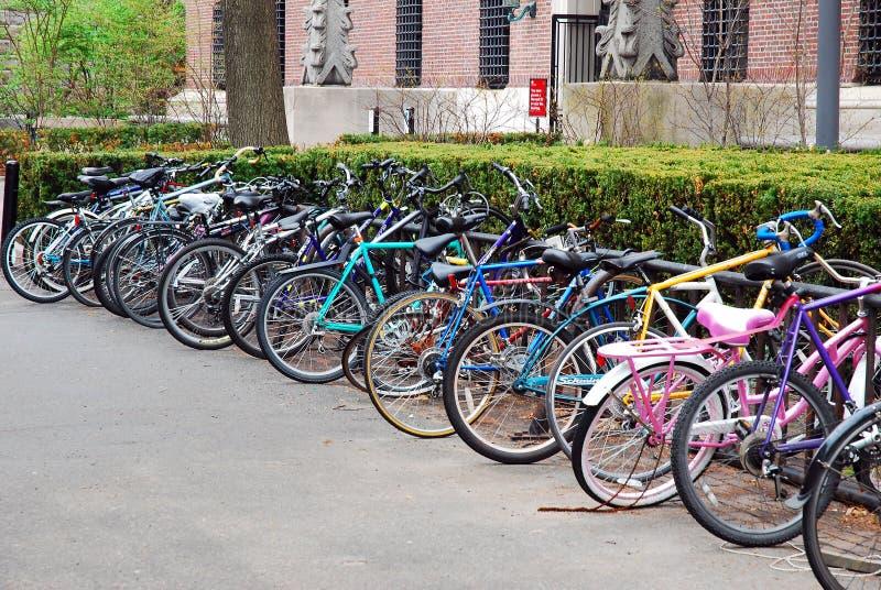 Bicicletas na Universidade de Harvard fotos de stock royalty free