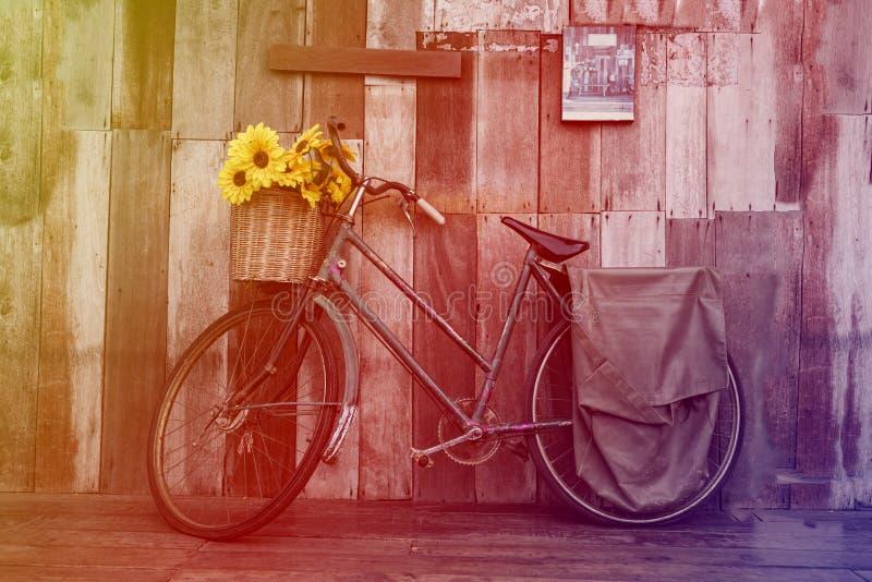 Bicicletta d'annata con i girasoli nel canestro sul fondo di legno rustico della parete fotografia stock libera da diritti