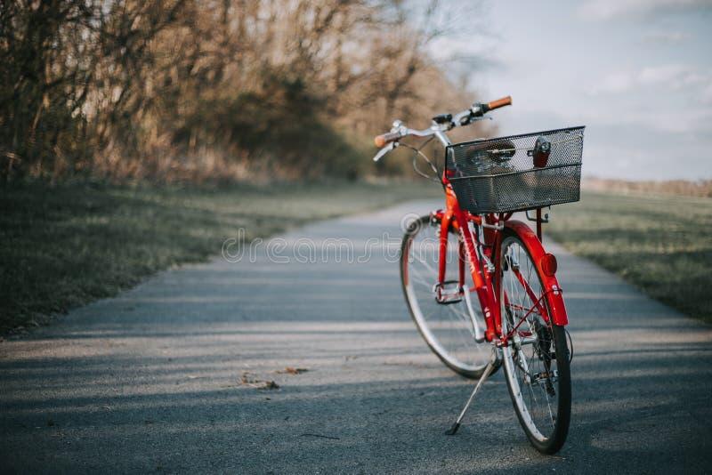 Bicicletta rossa con un canestro sulla parte posteriore su una strada sottile del cemento in un campo nella campagna immagini stock libere da diritti