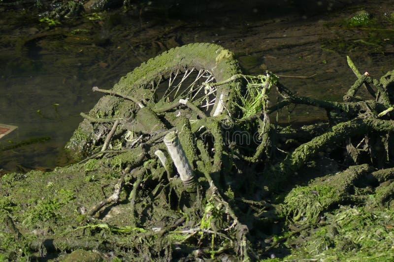 Bicicletta rubata nel canale coperto in alghe verdi ed in erbaccia immagini stock