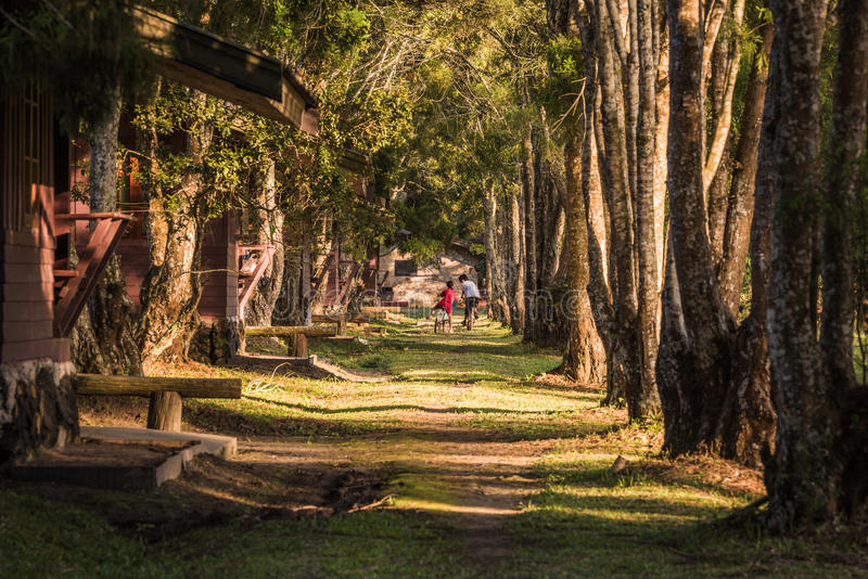 Bicis del montar a caballo de la familia en el camino forestal imagenes de archivo
