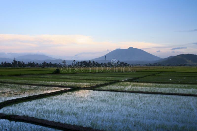 Bicol Reispaddysonnenuntergang Philippinen stockbilder