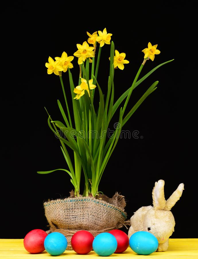 Bicolor Easter decoration. Bright yellow daffodils growing in pot wrapped with sackcloth and painted eggs of red and royalty free stock photos