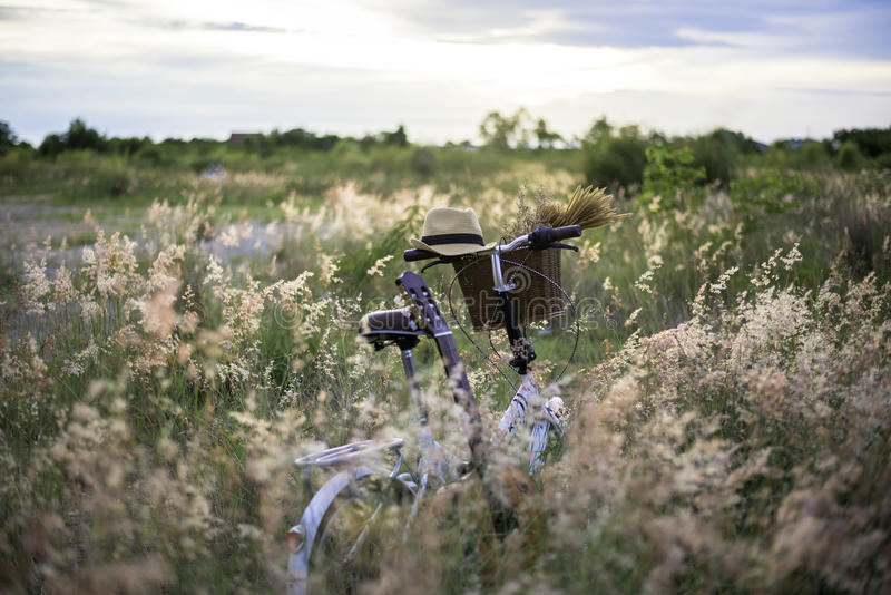 Bicycle with basket and guitar of flowers in meadow royalty free stock photography