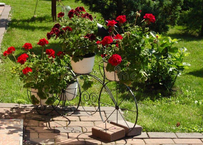 Bicycle decoration for the garden. Beautiful red flowers in the pots on a bicycle, decoration for the garden. Garden design  idea concept stock image