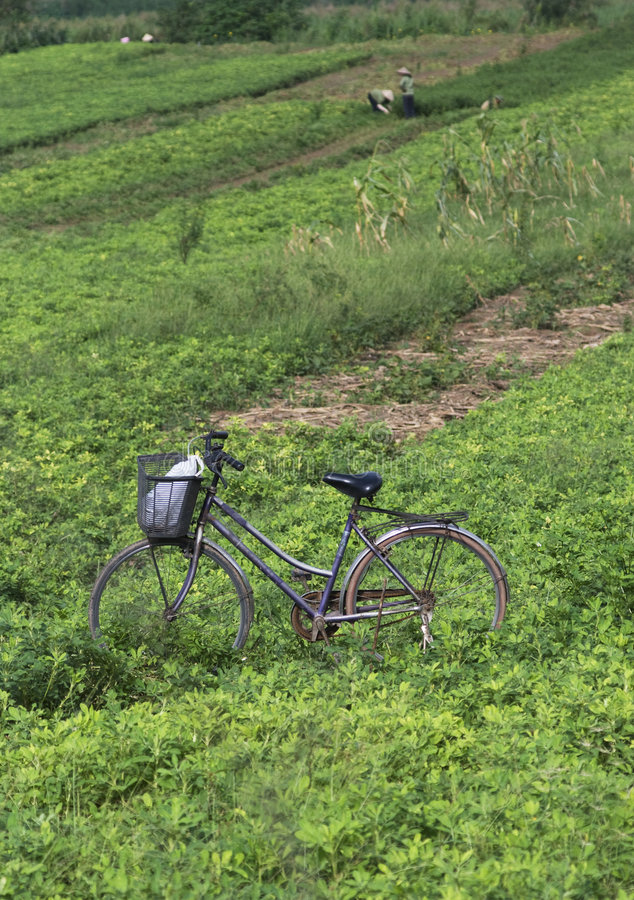 Bicycle in the field stock image