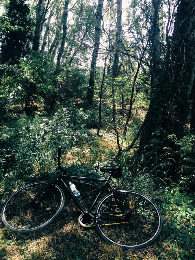 Bicycle in forest. Bicycle set on the ground in a forest stock photo