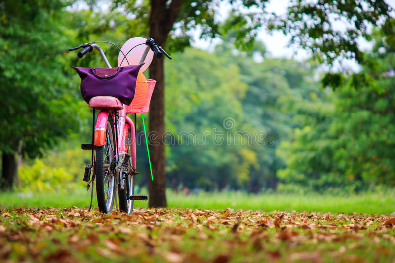 Bicycle in garden stock images