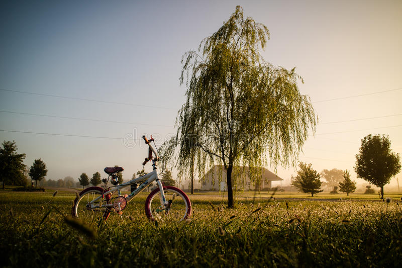 Bicycle in the green garden. With a medium tree stock photography