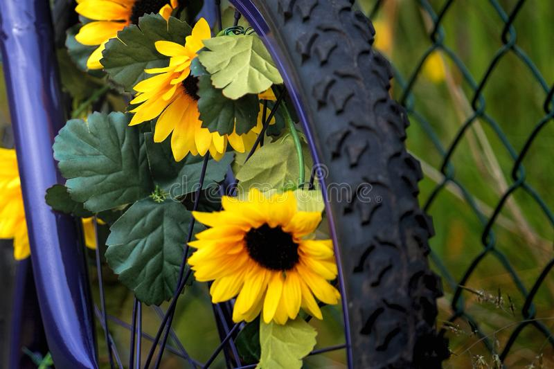 Bicycle wheel and yellow flowers stock image