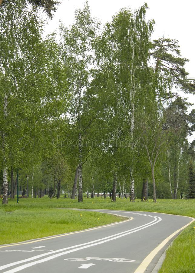 Download Bicycle lane in the park stock photo. Image of health - 19676706